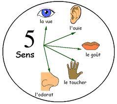 Les sens et la visualisation